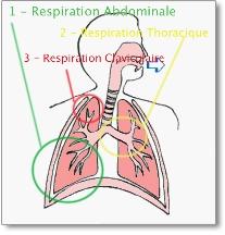 respiration-complete